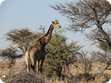 Namibia Discovery-0156
