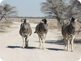 Namibia Discovery-0165