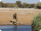 Namibia Discovery-0214