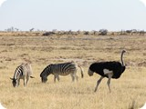Namibia Discovery-0219
