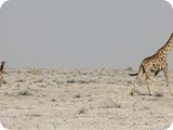Namibia Discovery-0268