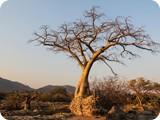 Namibia Discovery-0357