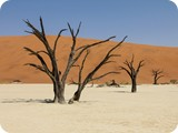 Namibia Discovery-1128