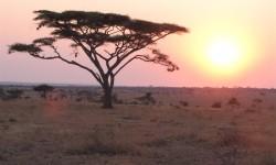 Tanzania 2010-299 (Large)