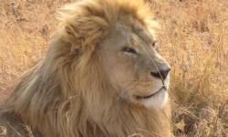 Tanzania 2010-313 (Large)