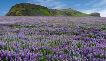 risveglio-terra---Islanda-2009-464-2
