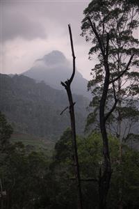 Adam's Peak o Sri Pada a scelta