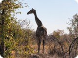 Namibia Discovery-0177