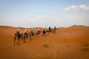 Dromedariata nel deserto